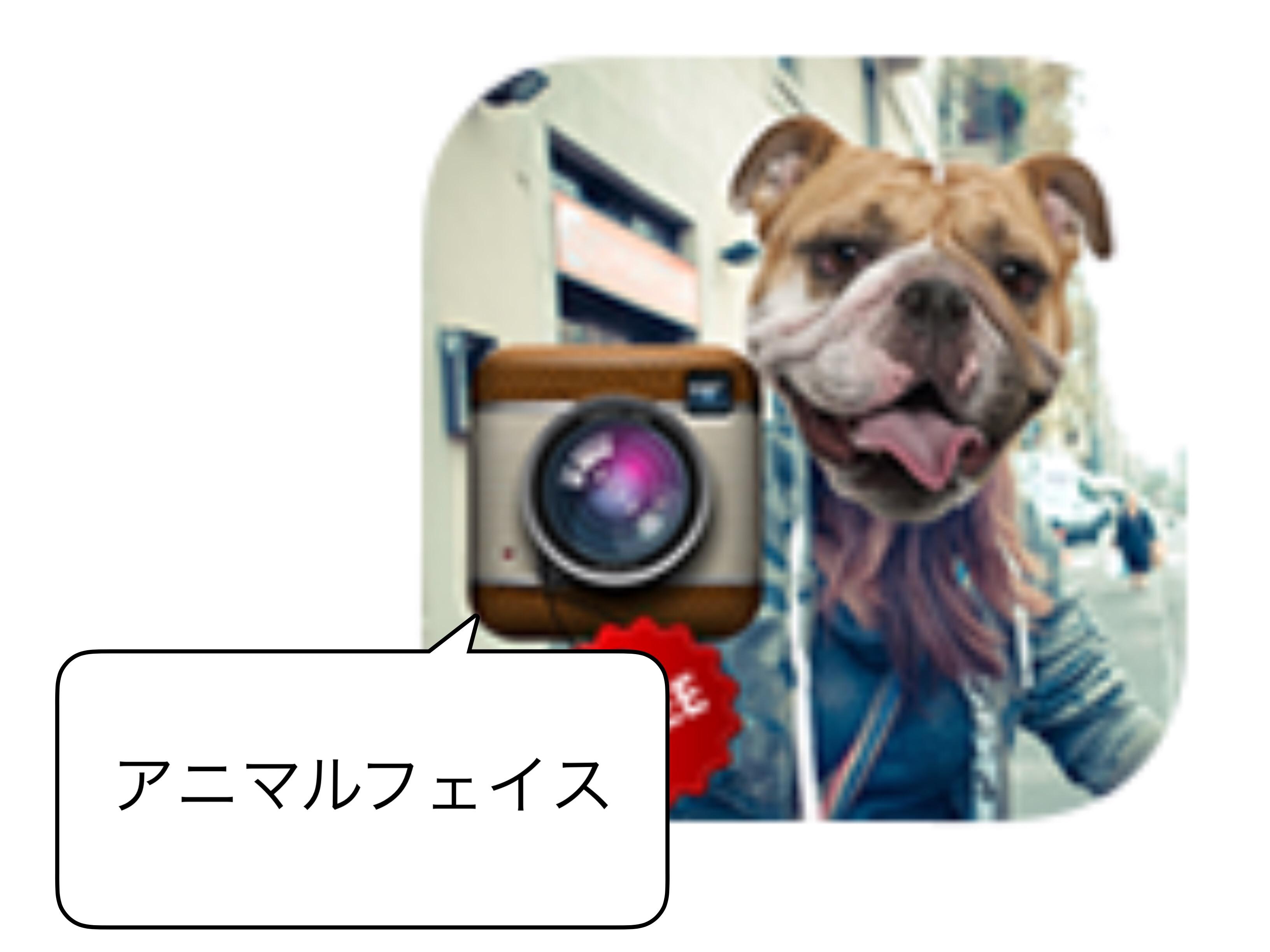 アプリ アニマルフェィス